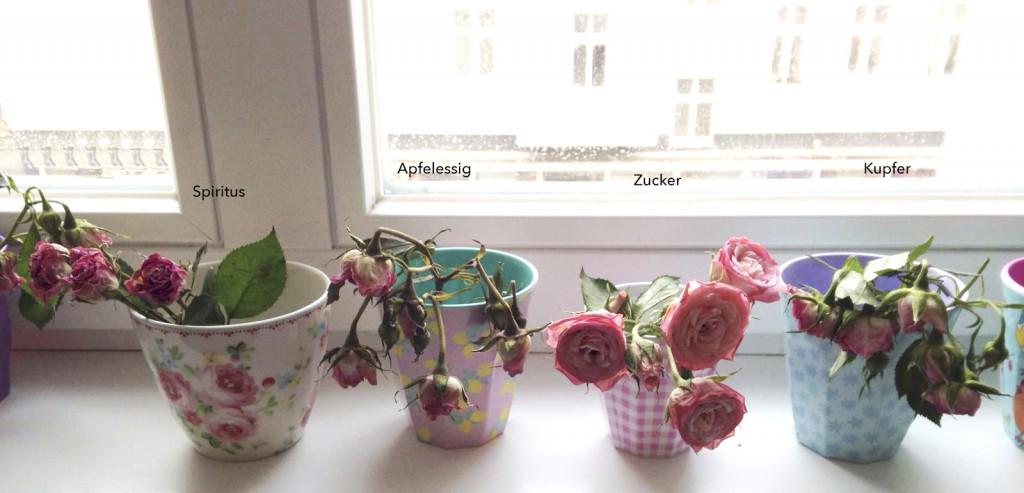 Wie bleiben Blumen länger frisch Rosanisiert- Ordnung für Unordentliche