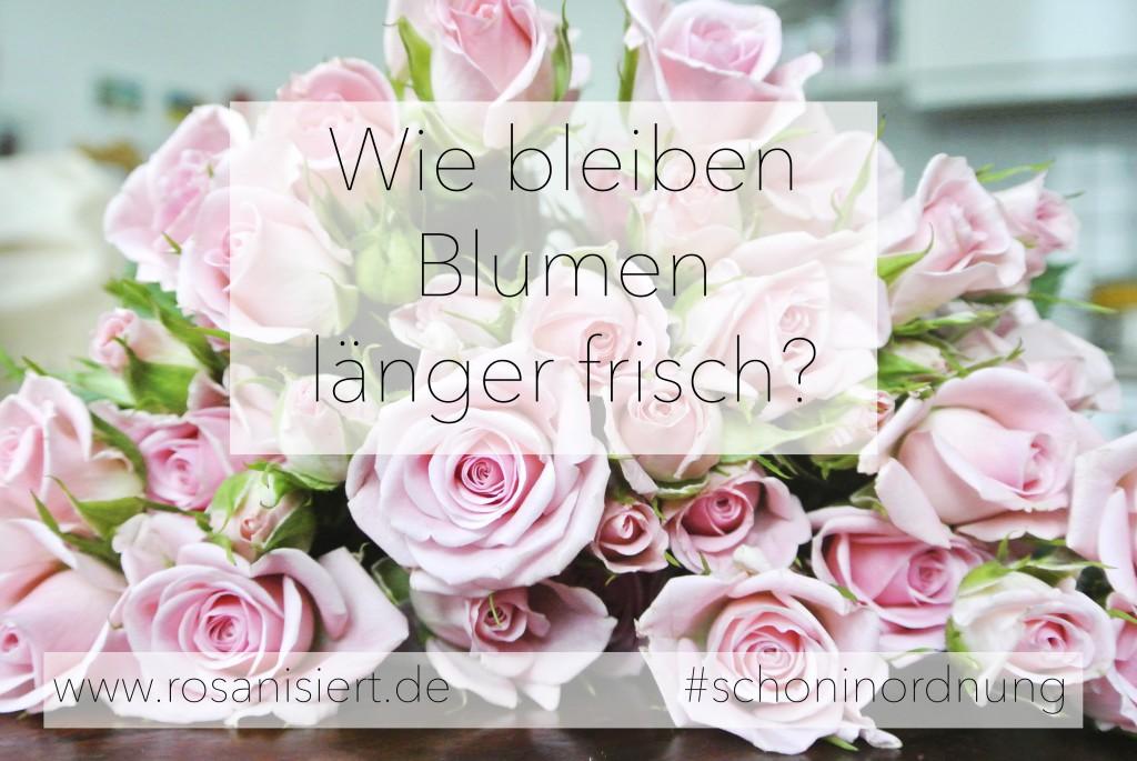 Wie bleiben Blumen länger frisch? Rosanisiert- Ordnung für Unordentliche