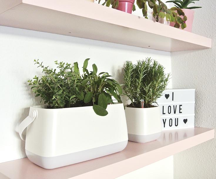 Das perfekte Geschenk für den Valentinstag YULA-Pflanzgefäße