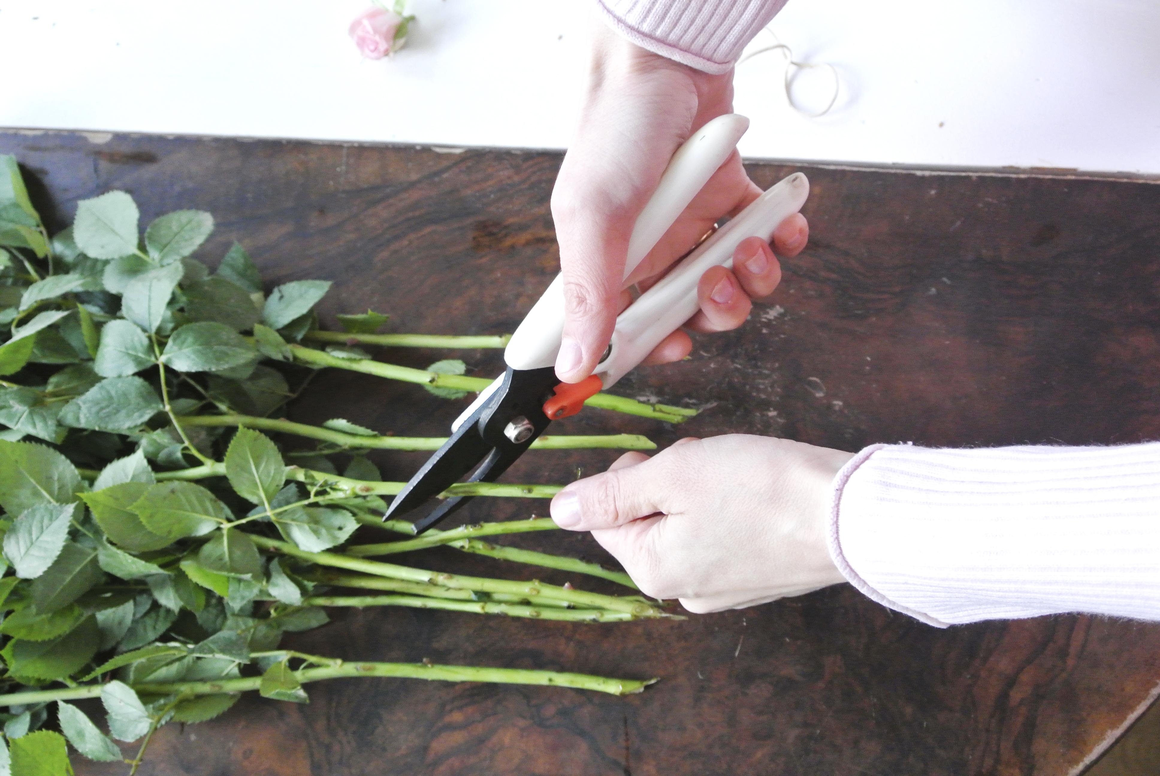 Valentinstag Wie Bleiben Blumen Langer Frisch Rosanisiert