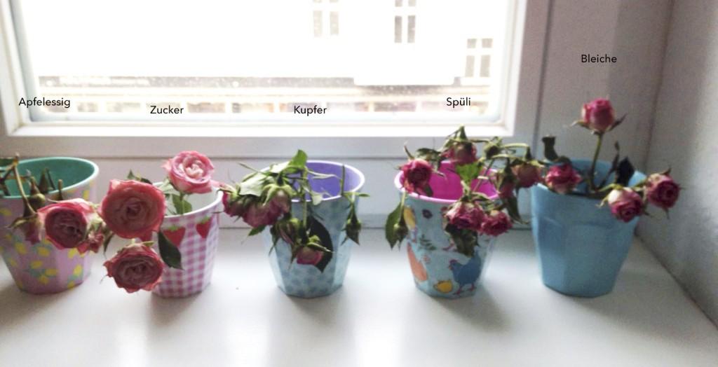 Wie halten Blumen länger frisch? Rosanisiert - Ordnung für Unordentliche