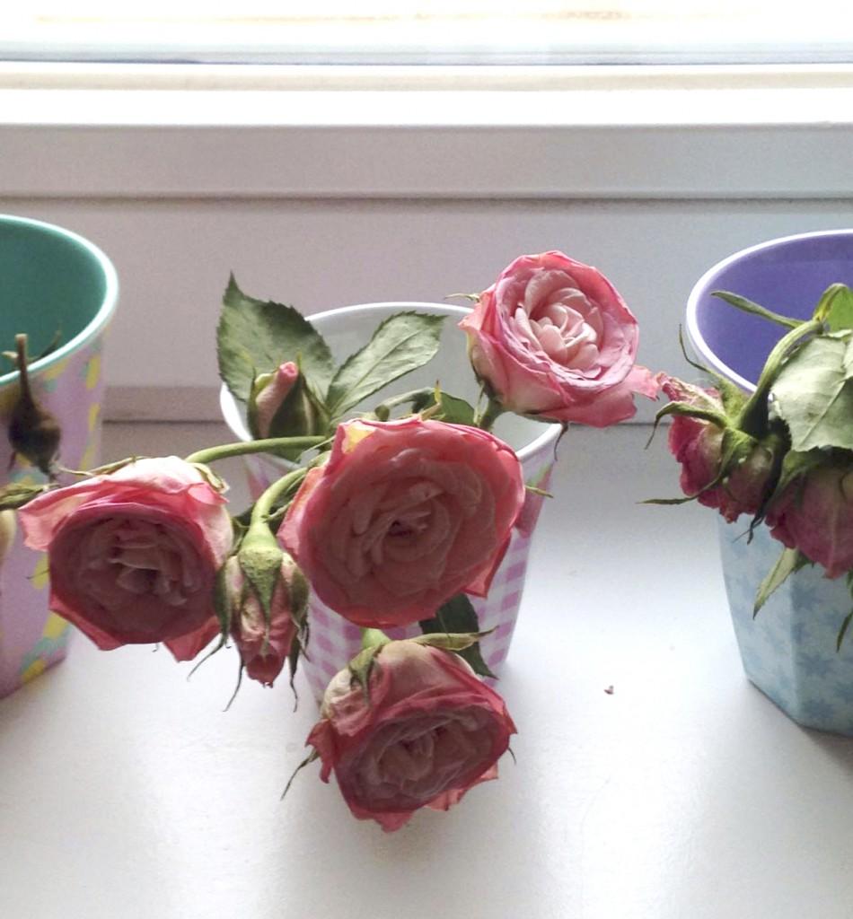 Wie halten Blumen länger frisch? Rosanisiert- Ordnung für Unordentliche